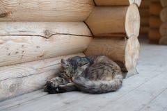 Pluizige kattenslaap op de portiek van een huis stock afbeeldingen