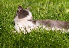 Pluizige leuke kat die in de zonnige dag genieten van stock foto's