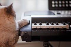 Pluizige Siamese Kat met Poot op Pianotoetsenbord Royalty-vrije Stock Foto