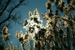 Pluizige stormloop tegen de zon in de winter Stock Afbeeldingen