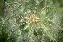Pluizige stroken op de wind Royalty-vrije Stock Fotografie