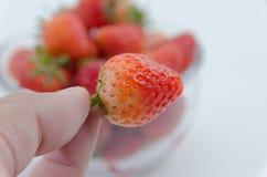 Pluk aardbeien Stock Afbeeldingen