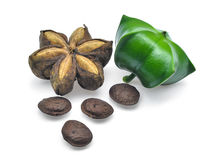 Plukenetia volubilis, sacha inchi, sacha peanut isolated on whit Stock Images