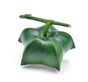Plukenetia volubilis, sachainchi, sachajordnöt som isoleras på whit Royaltyfri Fotografi