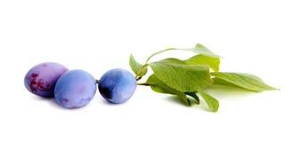 Plum. Ripe plum fruit on white background Royalty Free Stock Photography
