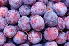 Plum. Fresh fruit background Stock Images