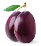 Isolated plums Royalty Free Stock Image