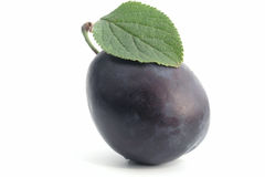Free Plum Stock Images - 221064