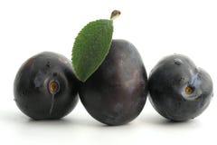 Plum. Fruits royalty free stock image
