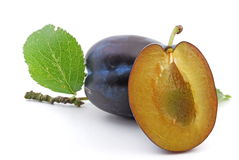 Free Plum Stock Images - 5966474