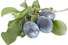 Plum. Large, ripe plums with leaves, on a white background stock photography