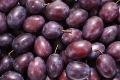 Plum royalty free stock images