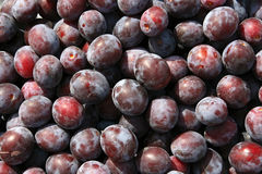 Plum. Close-ups of fresh plums. Natural source of vitamins Stock Photography