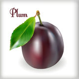 Plum-02 Photos stock