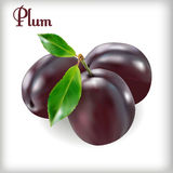 Plum-03 Photos stock
