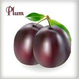 Plum-01 Imágenes de archivo libres de regalías