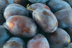 Plum. Group of blue plum closeup on the market royalty free stock image