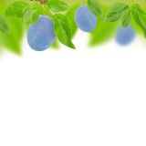 Plum abstract Royalty Free Stock Photography