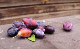 Plum. Against a wooden wall, the harvest in the fall Stock Images