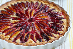 Plum and Almond Tart Stock Photography