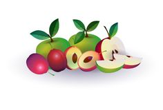Plum apple fruit on white background, healthy lifestyle or diet concept, logo for fresh fruits. Vector illustration royalty free illustration