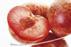 Plum and apricot hybrid Stock Image