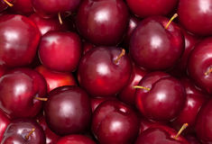 Plum background Stock Image