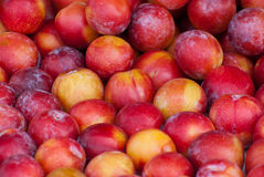 Plum, background. Royalty Free Stock Images