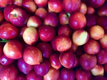 Plum background Royalty Free Stock Photography