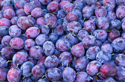 Plum background. Background of plum at the market Stock Photo