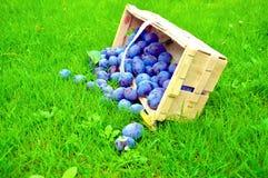 The Plum basket Stock Photo