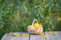 plum in basket on wooden table outdoor Royalty Free Stock Photos
