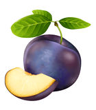 Plum. Beautiful fresh realistic plums illustration vector illustration