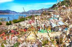 Plum Blooming in het Dorp van Wondong Maehwa, Yangsan, Zuid-Korea, Azië royalty-vrije stock afbeelding
