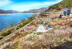 Plum Blooming in het Dorp van Wondong Maehwa, Yangsan, Zuid-Korea, Azië royalty-vrije stock fotografie