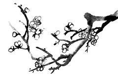 Plum blossom. Chinese black and white traditional ink painting, plum blossom on white background stock illustration