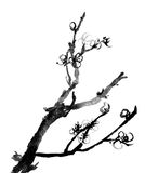 Plum blossom. Chinese black and white traditional ink painting, plum blossom on white background royalty free illustration