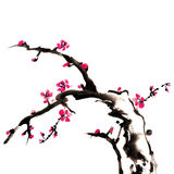 Plum blossom. Chinese painting of flowers, plum blossom, on white background stock illustration