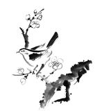 Plum blossom. Chinese painting , plum blossom and bird, on white background Royalty Free Stock Photos