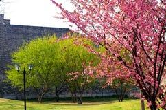 Plum Blossom stockbilder