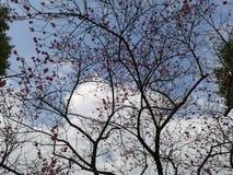 Plum Blossom Royalty-vrije Stock Fotografie