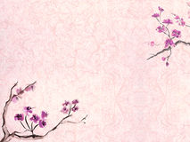 Plum blossom background Stock Photo
