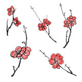 Plum blossom branches Royalty Free Stock Image