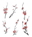 Plum blossom branches Royalty Free Stock Images