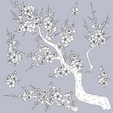 Plum Blossom Branches monocromática Fotos de archivo
