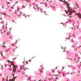 Plum Blossom Branches Square Frame Fotografía de archivo