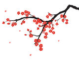 Plum blossom. In Chinese painting style Royalty Free Stock Photos