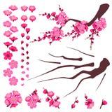 Plum Blossom Elements Set Illustration Stock