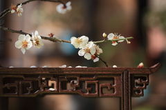 Flower and table Stock Photography