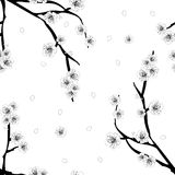 Plum Blossom Flower Outline on White Background. Vector Illustration. Plum Blossom Flower Outline on White Background. Vector Illustration vector illustration